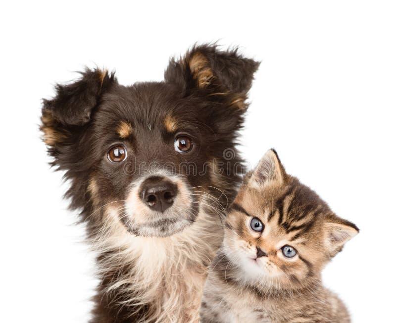 Cão de cachorrinho do close up e gatinho junto Isolado no branco imagens de stock royalty free