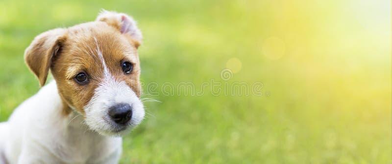 Cão de cachorrinho feliz bonito que olha a câmera fotos de stock