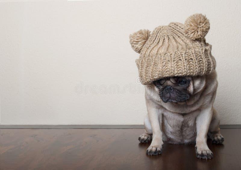 Cão de cachorrinho triste lamentável pequeno bonito do pug, sentando-se para baixo no assoalho de madeira fotografia de stock