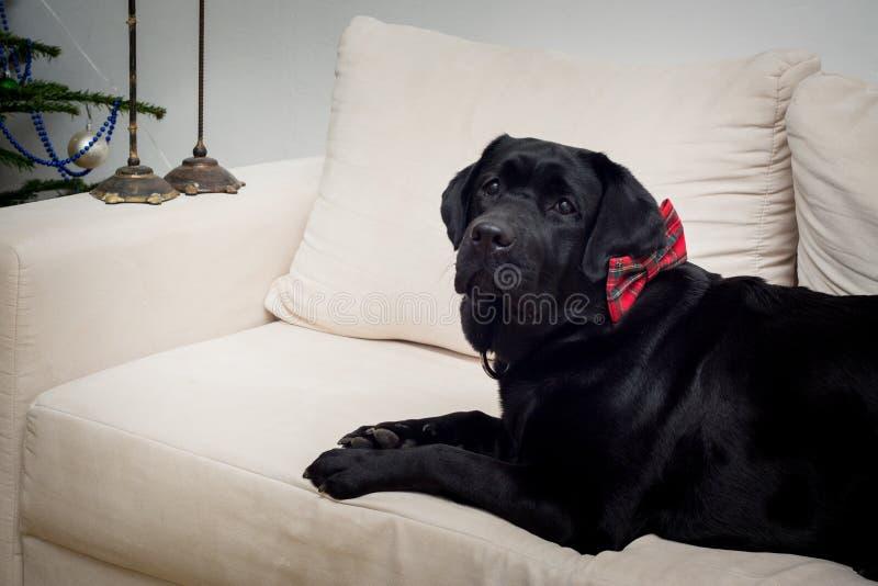 Cão de Christams fotos de stock