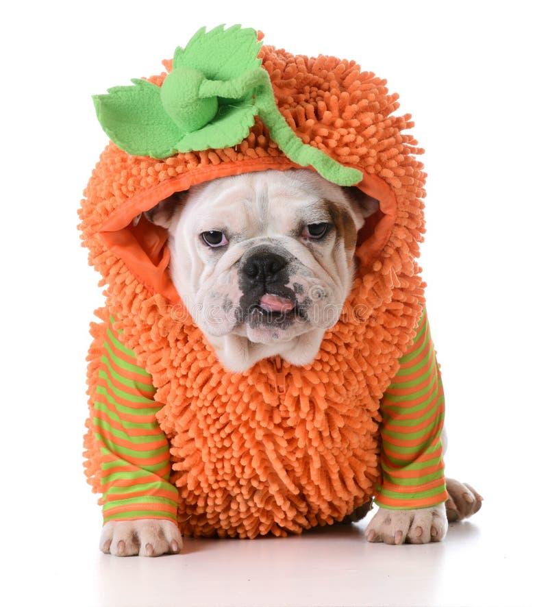 Cão de Dia das Bruxas foto de stock royalty free