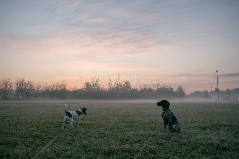 Cão de dois jovens na caminhada da manhã imagens de stock royalty free
