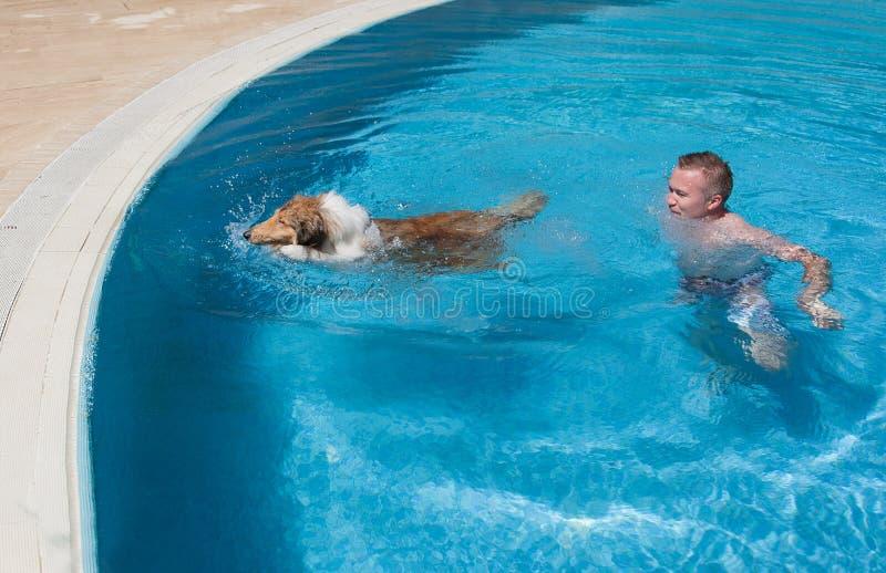 Cão de ensino da collie do homem novo a nadar na associação fotos de stock royalty free