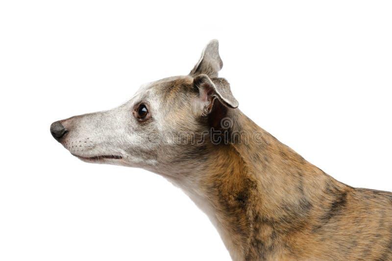 Cão de escuta imagens de stock royalty free