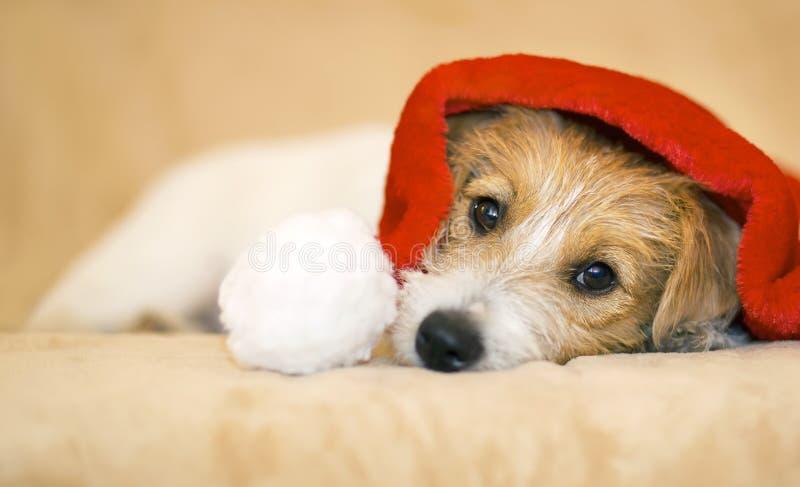 Cão de estimação bonito do Natal com chapéu de Santa Claus imagens de stock royalty free