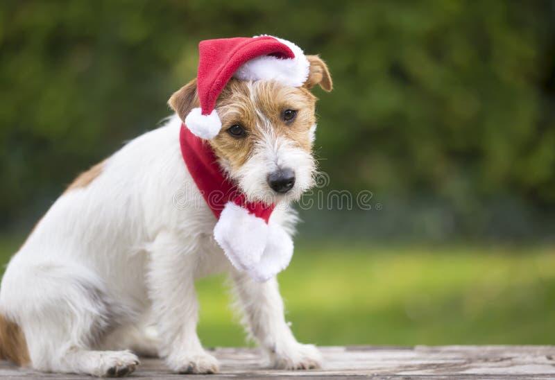 Cão de estimação do cachorrinho da surpresa do presente do Natal com chapéu de Santa imagem de stock
