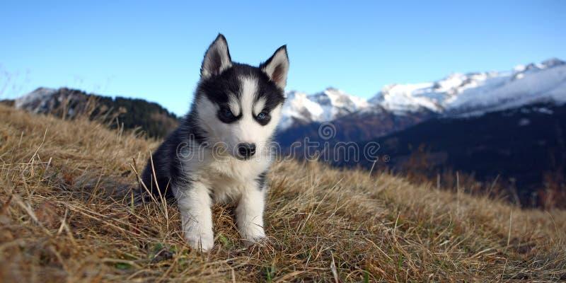 Cão de filhote de cachorro na frente de um cenário da montanha fotografia de stock