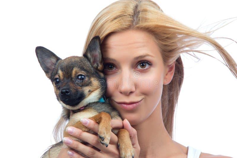 Cão de filhote de cachorro pequeno da chihuahua da preensão da mulher imagens de stock royalty free