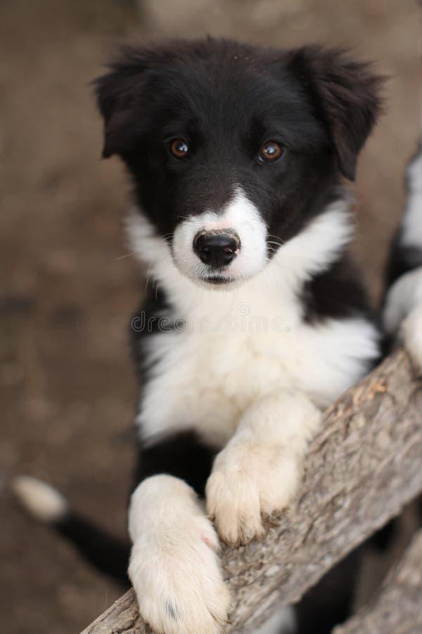 Cão de filhote de cachorro preto e branco bonito fotos de stock
