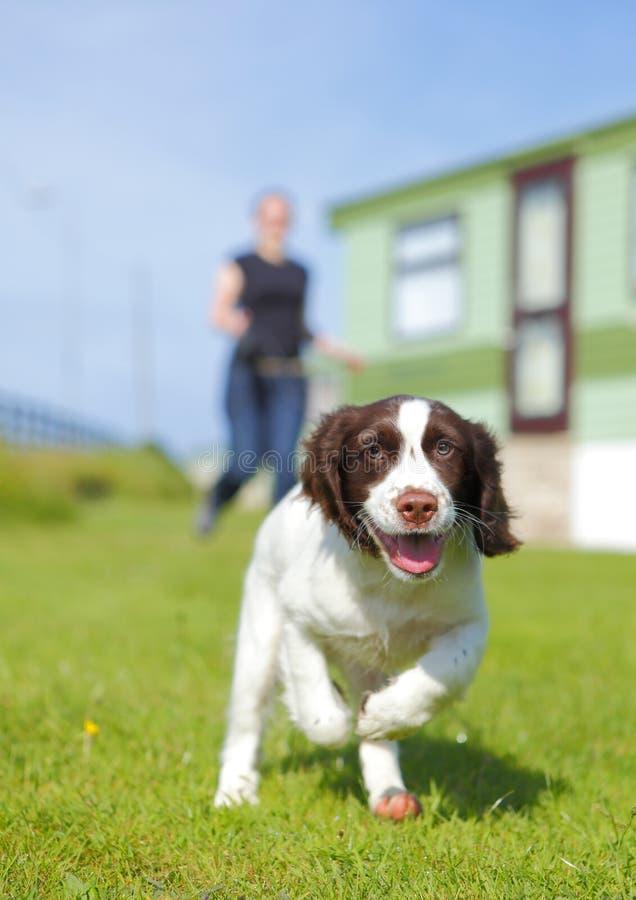 Cão de filhote de cachorro Running fotografia de stock royalty free