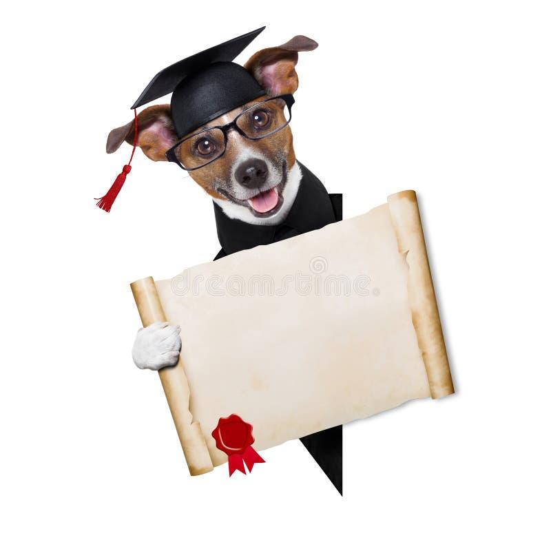 Cão de Garduate fotos de stock