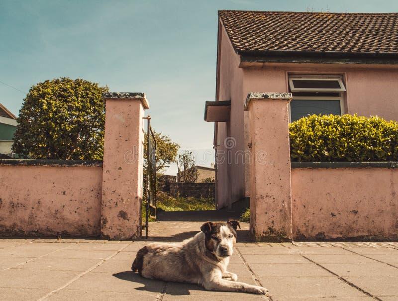 Cão de guarda fora da casa fotografia de stock royalty free