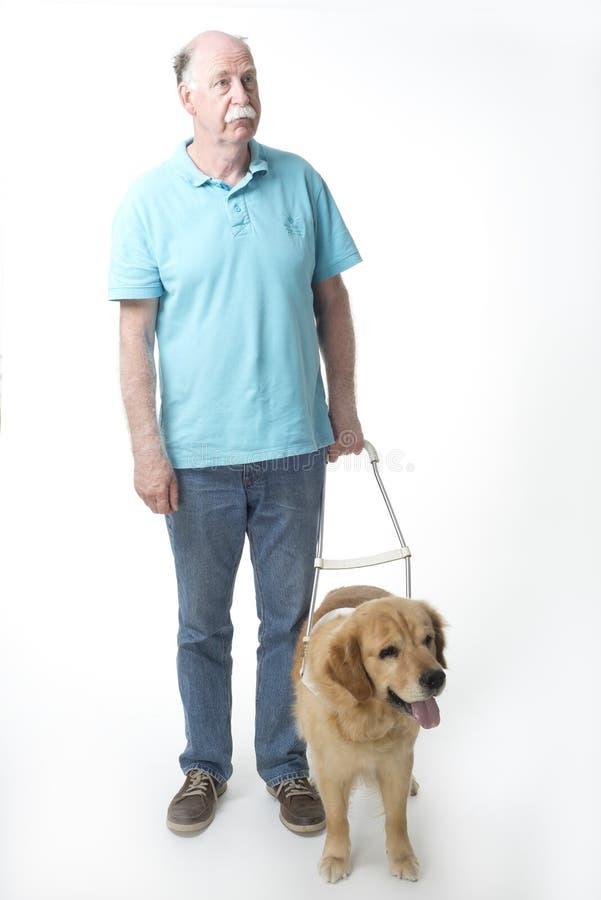 Cão de guia no branco foto de stock royalty free