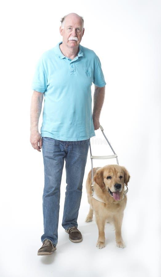 Cão de guia no branco fotos de stock royalty free