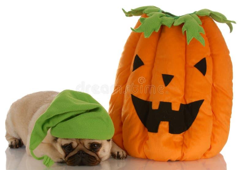 Cão de Halloween fotos de stock