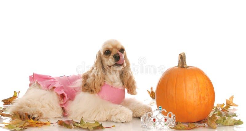Cão de Halloween foto de stock
