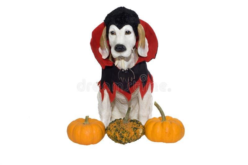 Cão de Halloween fotografia de stock royalty free