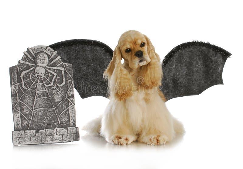 Cão de Halloween foto de stock royalty free