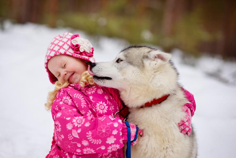 Cão de Hasky que lambe a menina fotografia de stock royalty free