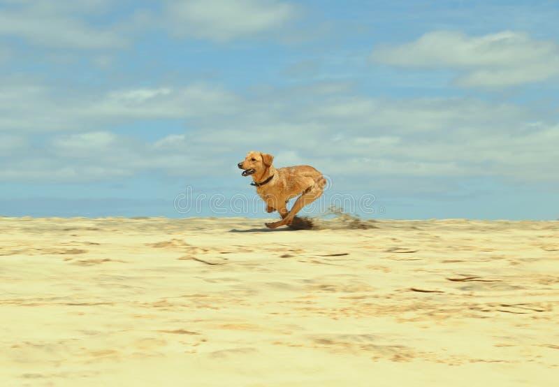 Cão de jogo sozinho imagens de stock royalty free