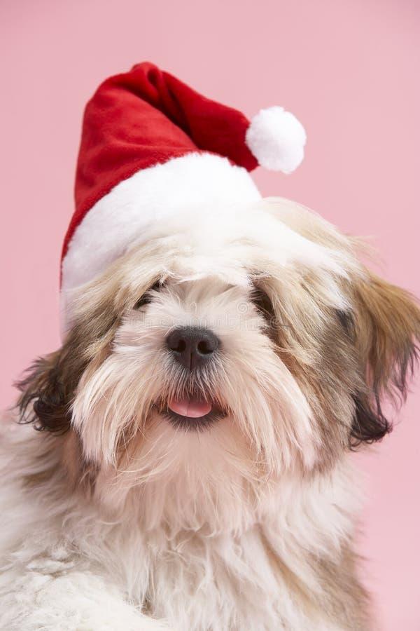 Cão de Lhasa Apso que desgasta o chapéu de Santa imagens de stock royalty free