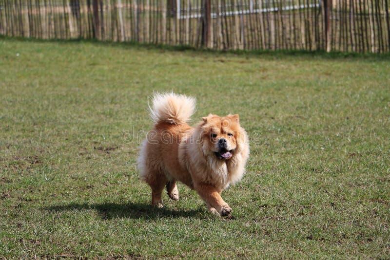 Cão de passeio da comida de comida foto de stock royalty free