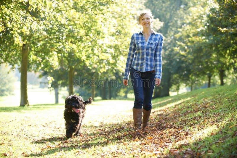 Cão de passeio da mulher foto de stock