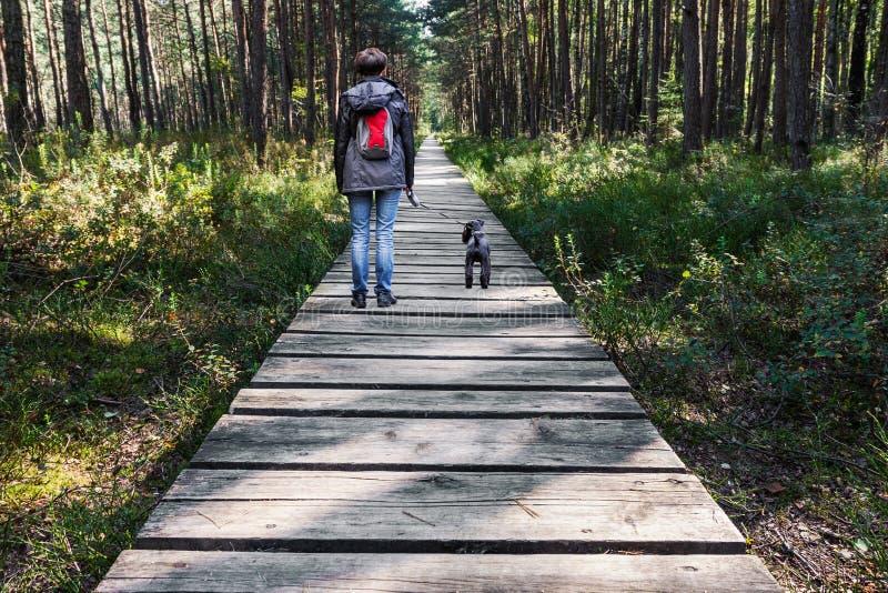 Cão de passeio da mulher no caminho de madeira nas madeiras fotografia de stock royalty free