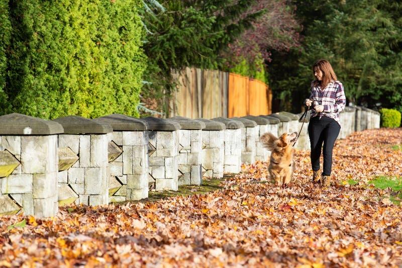 Cão de passeio do golden retriever da mulher nas folhas da queda imagens de stock royalty free