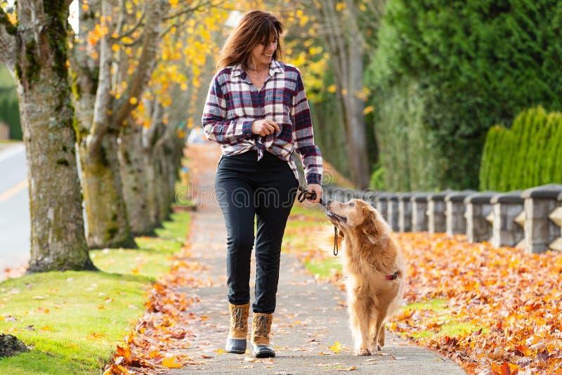 Cão de passeio do golden retriever da mulher nas folhas da queda fotografia de stock