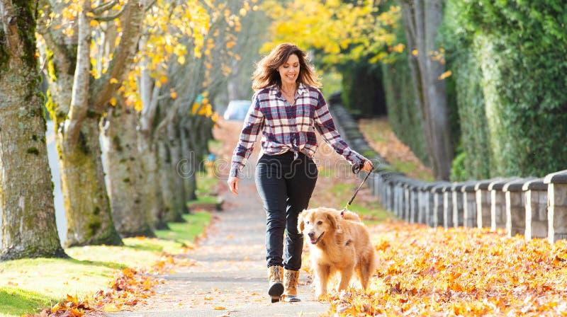 Cão de passeio do golden retriever da mulher nas folhas da queda imagem de stock royalty free