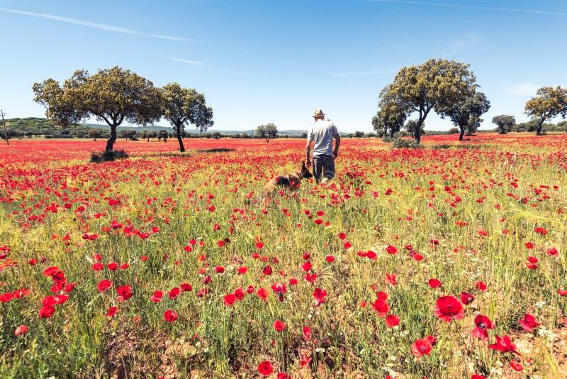 Cão de passeio do homem do desejo por viajar no prado selvagem imagem de stock royalty free