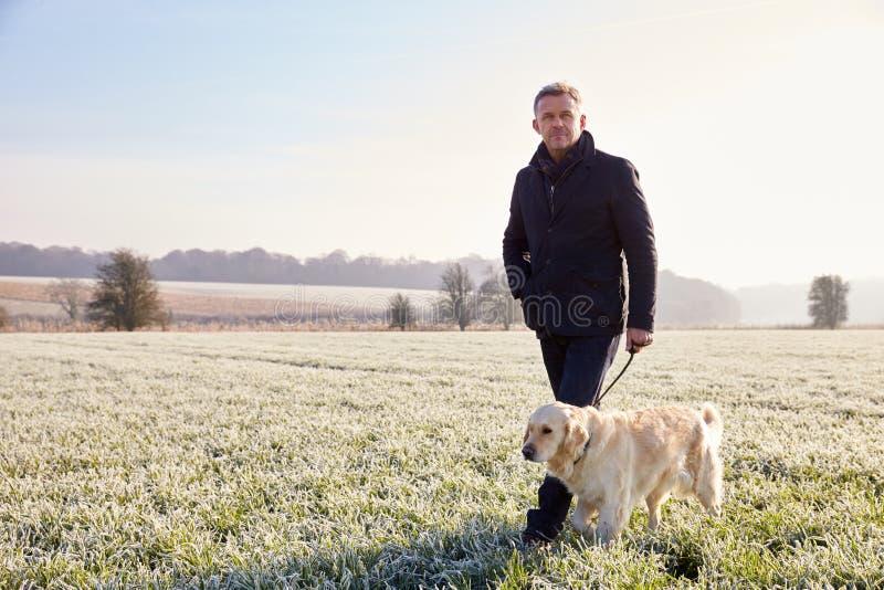 Cão de passeio do homem maduro em Frosty Landscape foto de stock royalty free
