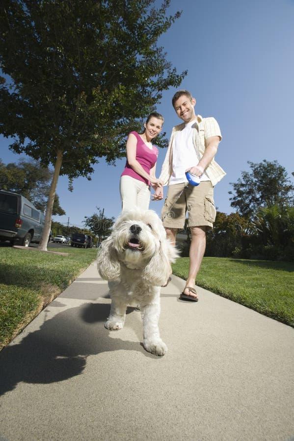 Cão de passeio dos pares ao longo do pavimento imagens de stock royalty free
