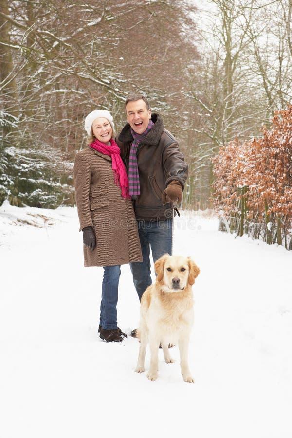 Cão de passeio dos pares sênior através da floresta nevado fotografia de stock royalty free