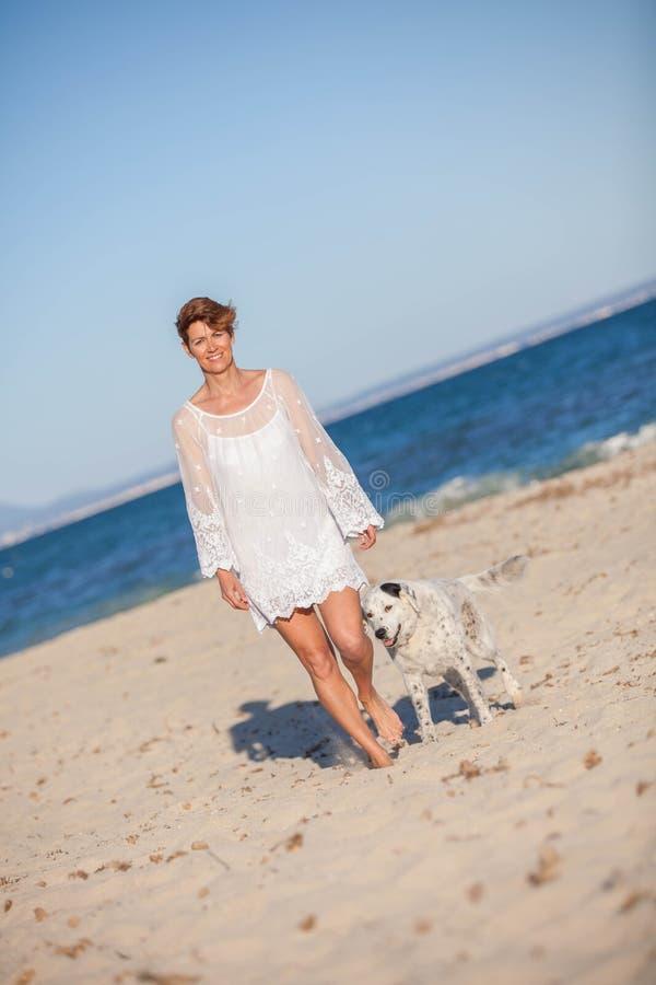 Cão de passeio na praia imagem de stock