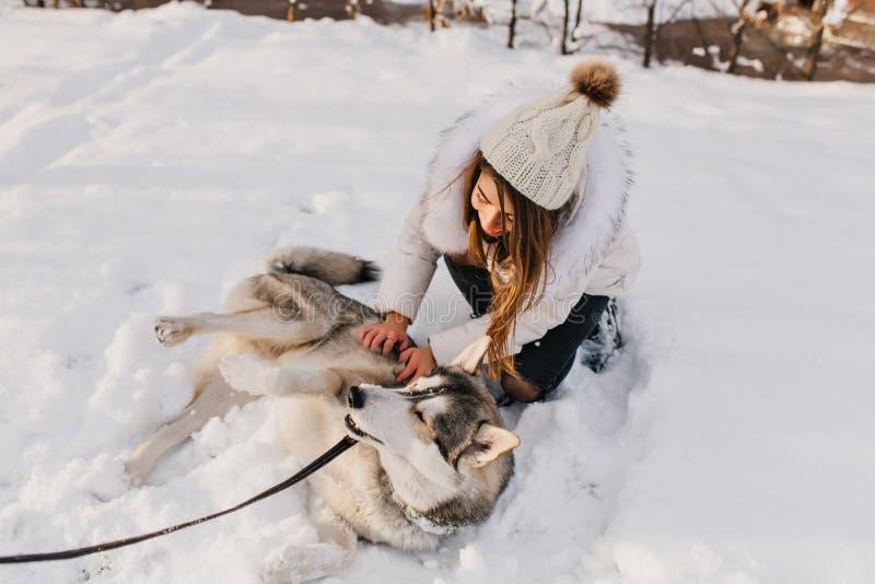 Cão de puxar trenós satisfeito que descansa na neve que aprecia o inverno durante o divertimento exterior Retrato da jovem mulher foto de stock royalty free