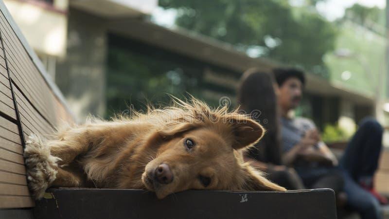 Cão de relaxamento imagens de stock