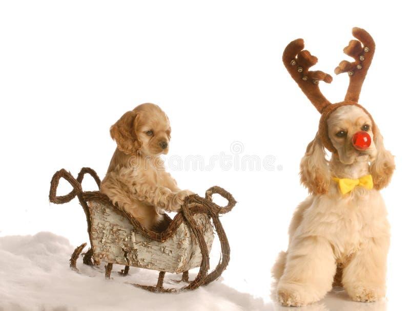 Cão de Rudolph que puxa o trenó fotografia de stock royalty free