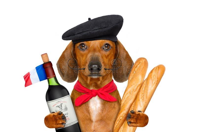 Cão de salsicha francês fotos de stock royalty free