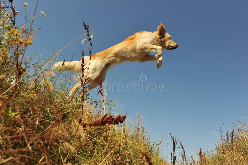 Cão de salto imagem de stock