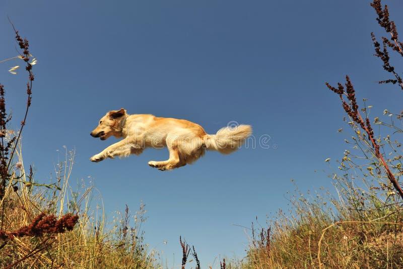Cão de salto fotografia de stock