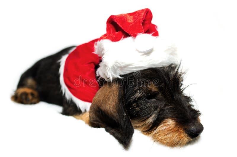 Cão de Santa imagens de stock