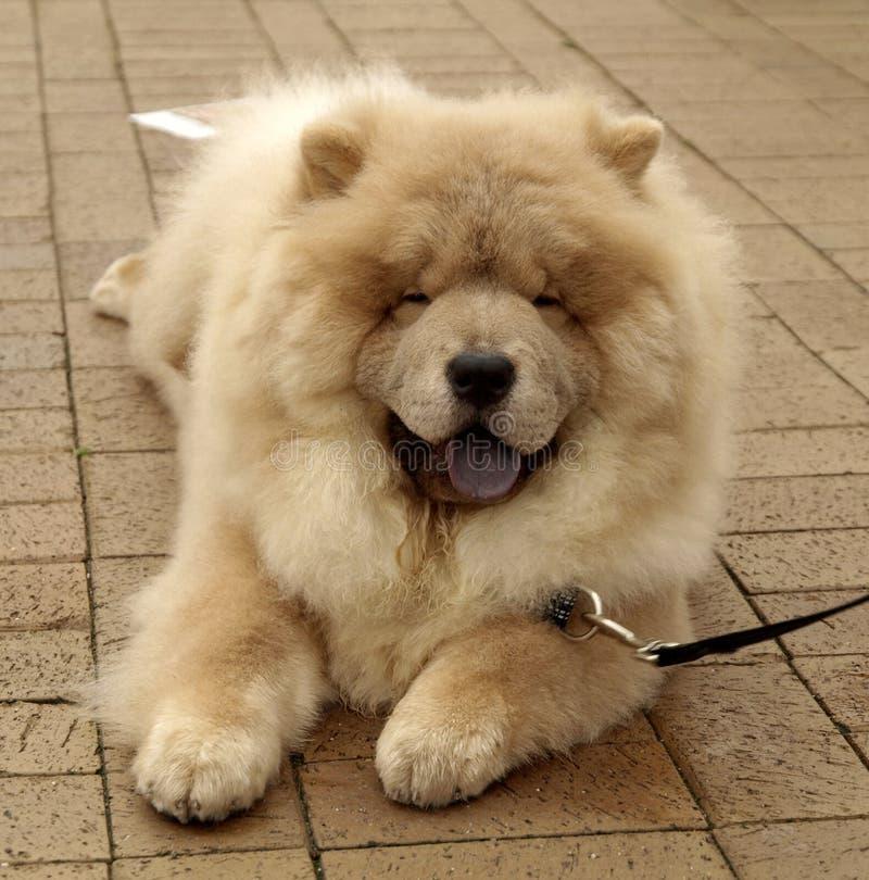Cão de sorriso da comida da comida imagem de stock