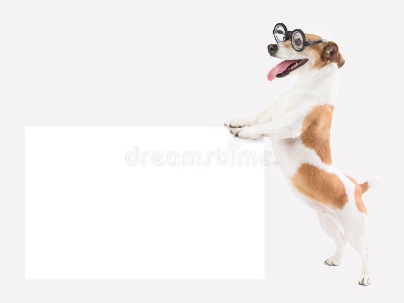 Cão de sorriso dos vidros foto de stock