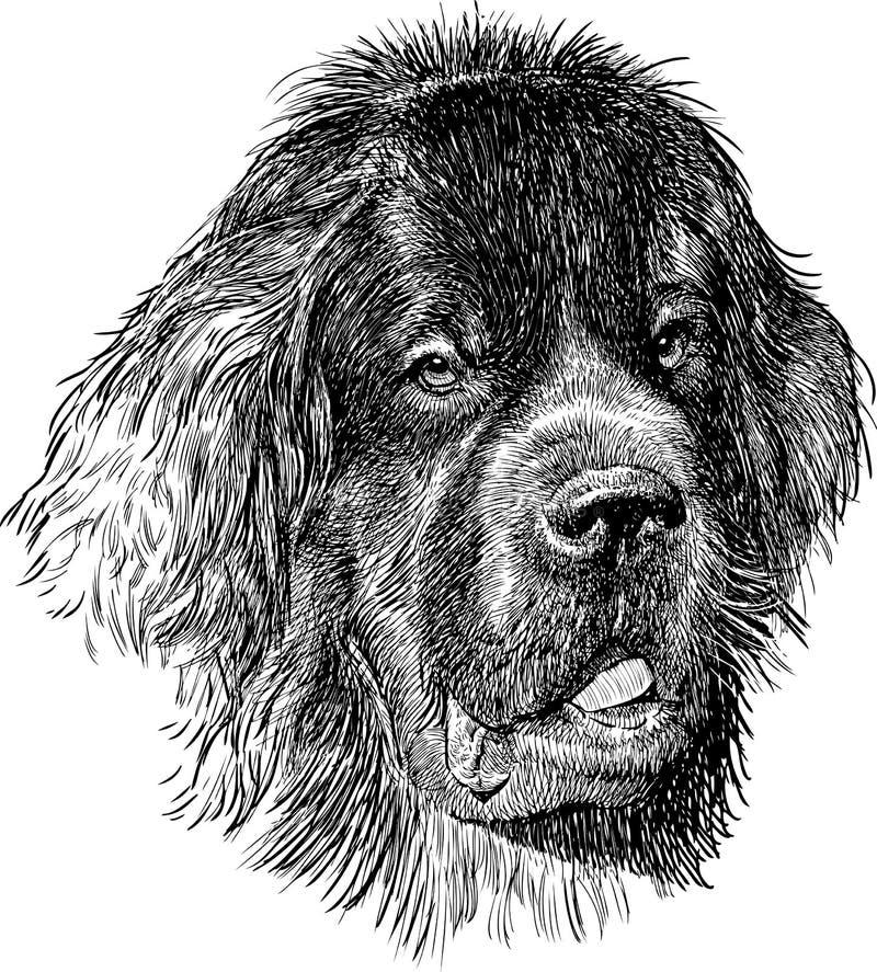 Cão de Terra Nova ilustração royalty free