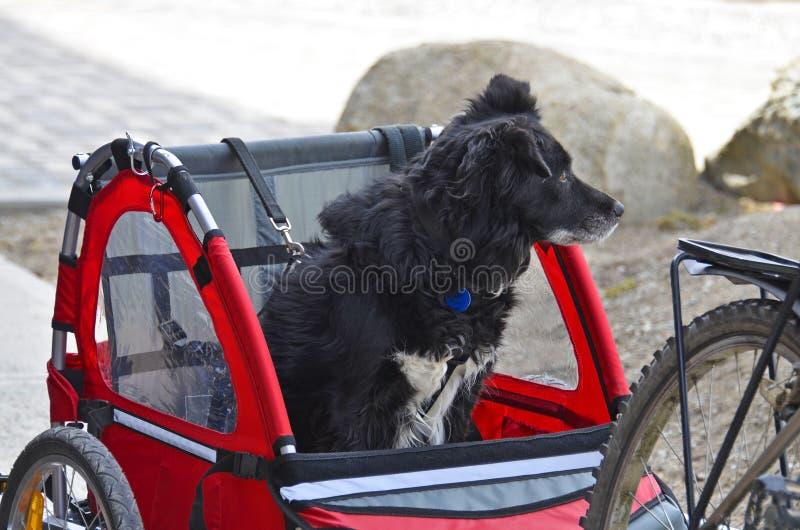 Cão de viagem fotografia de stock