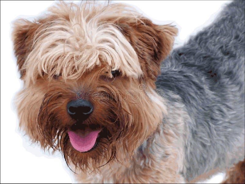 Cão de Yorkshire fotografia de stock