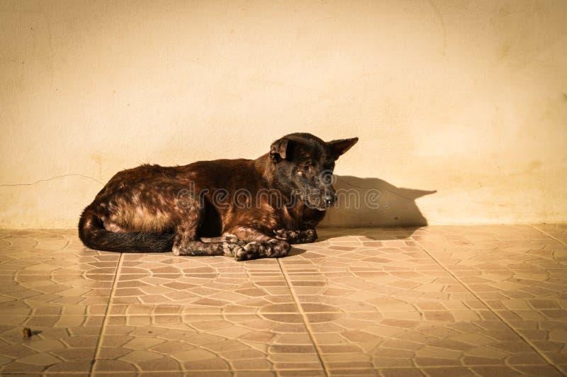 Cão desabrigado e com fome foto de stock royalty free