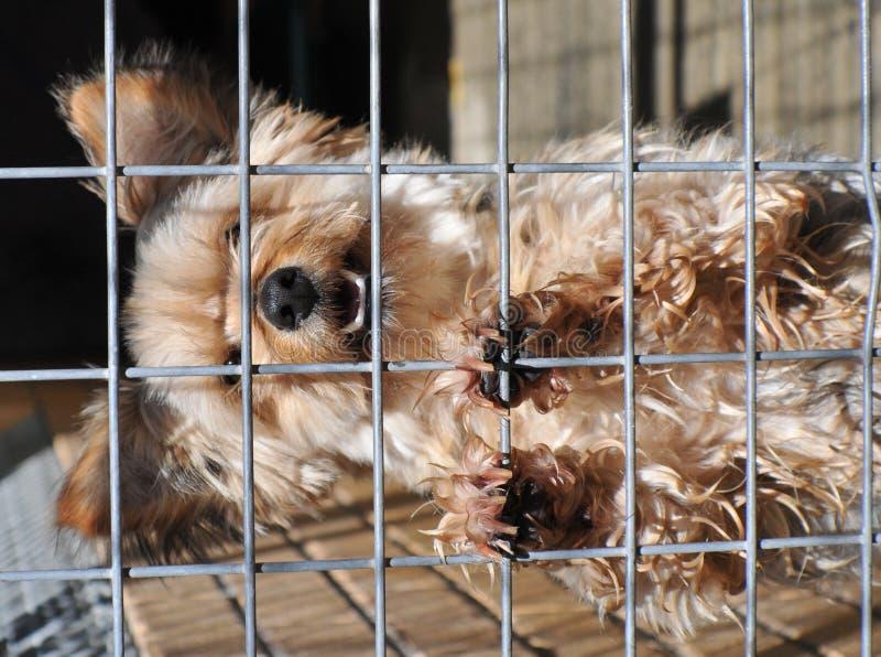 Cão desabrigado esperançoso foto de stock